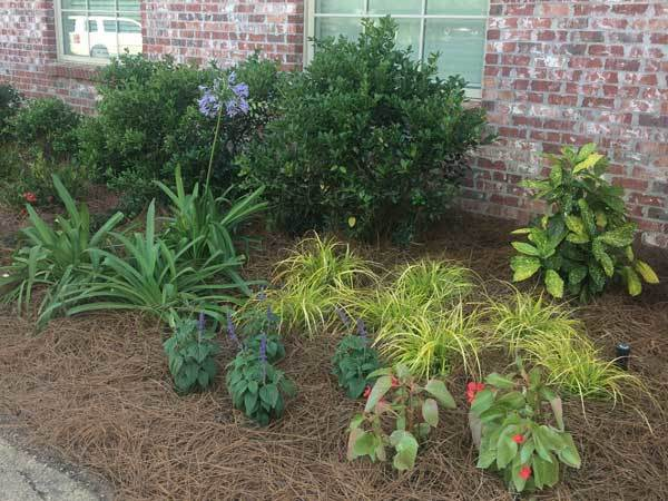 Plant Lady Commercial Flower Bed Example 3